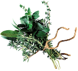medieval medicinal herbs