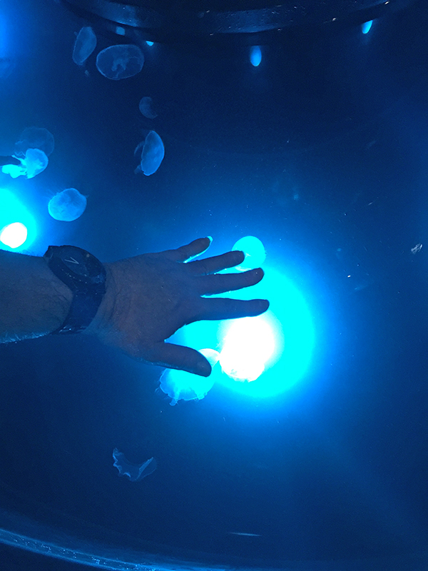 Touching the Jellyfish