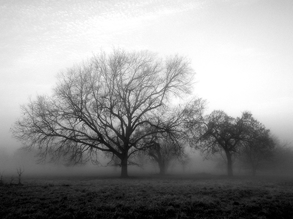 Photo of trees in the mist, a reminder of how short life can be and the need to choose happiness now, not to wait until circumstances are just right.